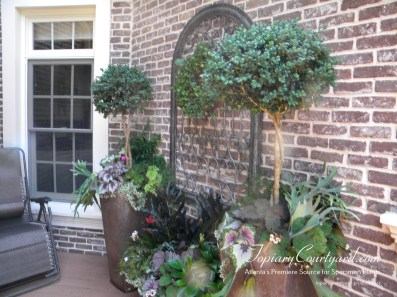 topiary-courtyard-product-w34