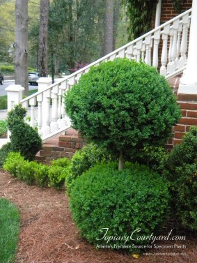 topiary-courtyard-product-w43