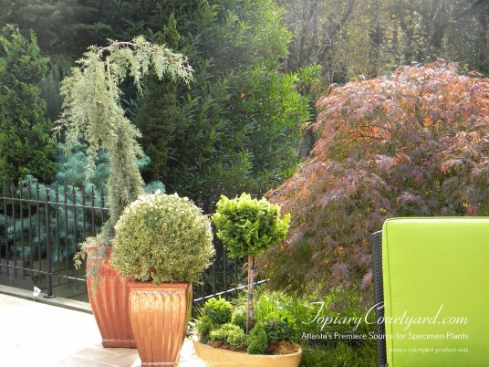 topiary-courtyard-product-w46