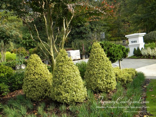 topiary-courtyard-product-w47