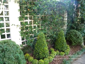 topiary-courtyard-product-w55