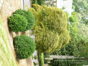 topiary-courtyard-product-w63