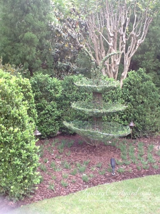topiary-courtyard-product-w66
