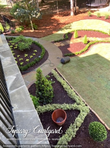 Boxwoods in parterre pattern