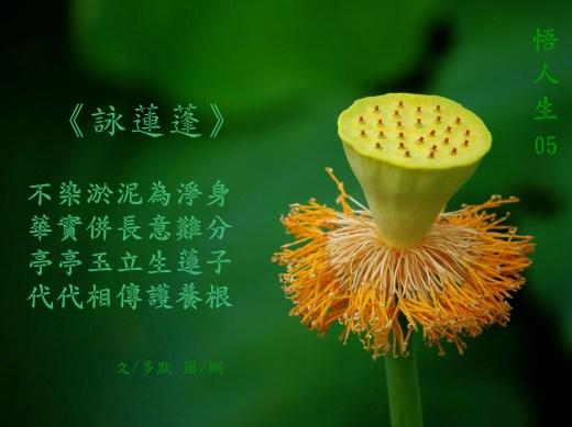 《多默詩詞選-悟人生05》-詠蓮蓬