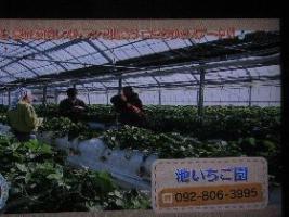 (画像1)池いちご園