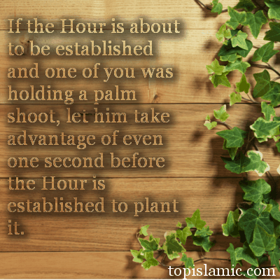 islamic pictures & quotes about plants