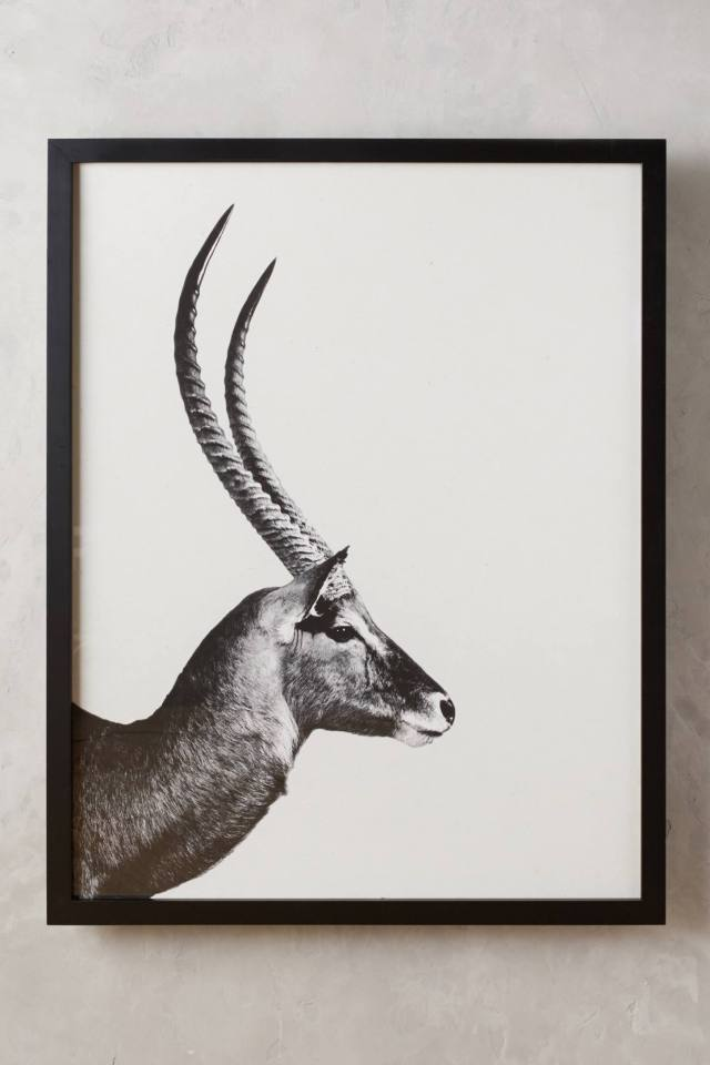 Antelope Sentry Wall Art