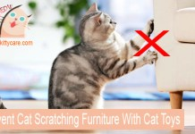 Prevent Cat Scratching Furniture With Cat Toys