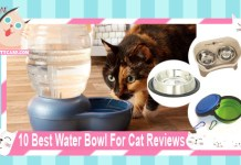 10 Best Water Bowl For Cat Reviews