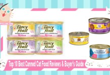 Top 10 Best Canned Cat Food Reviews and Buyers Guide.