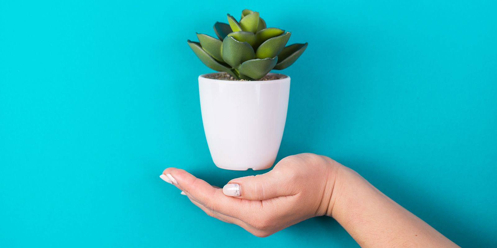 A picture of a white plant pot with a cactus in with a blue background on the B2B PR agency page.