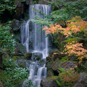 Fall colors and a waterfall at the Portland Japanese Garden