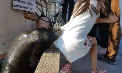 Sea lion attacks girl-tourist   Video
