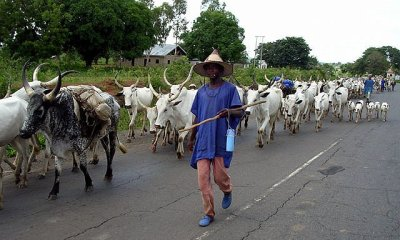 Benue: Why We Are Against Cattle Ranching – Fulani herdsmen