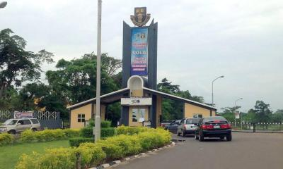 25-year-old man arrested for stealing cows belonging to OAU topnaija.ng