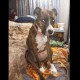 How good Samaritan's car and dog was stolen by crash victim she went to help-TopNaija.ng
