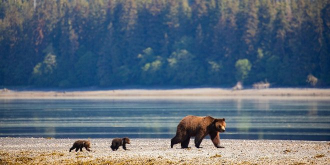 Biden Plans to Restore Alaskan Forest Protections Stripped Under Trump