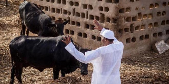 Buhari wants more Nigerians on the farm