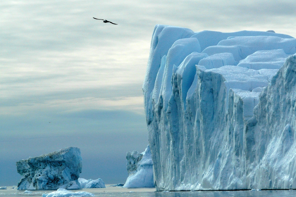 A seven square kilometre section of Greenland''s Jakobshavn Isbrae glacier broke up on July 6 and 7.