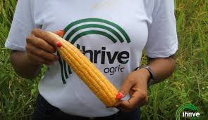 Thrive Agric Operation Might Collapse, See Why