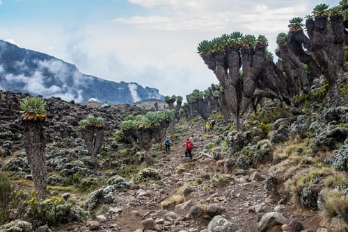 How Much Does It Cost To Hike Mount Kilimanjaro?