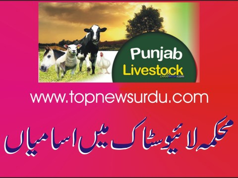 jobs in livestock 2019
