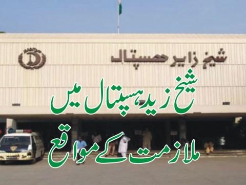 jobs in sheikh zayed hospital
