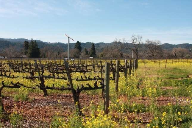 vincent-arroyo-vineyards