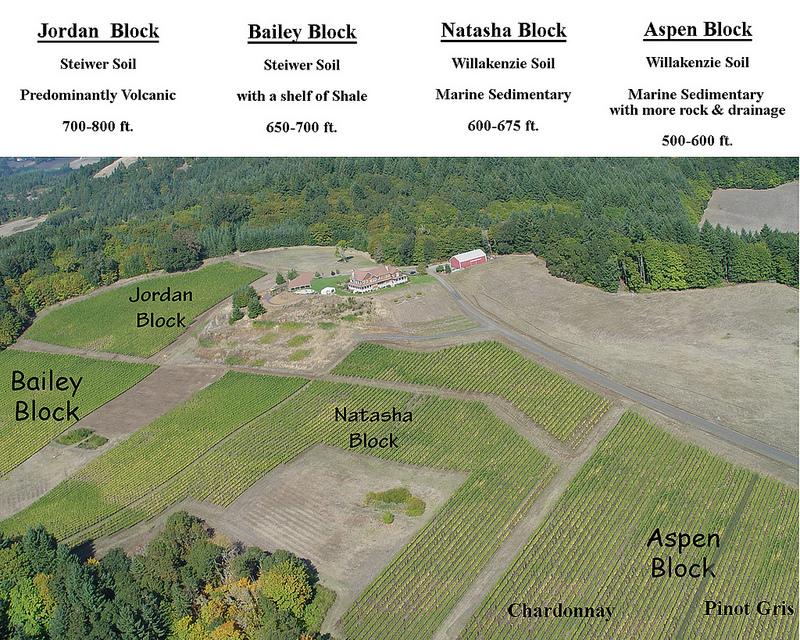 vineyard blocks.jpg