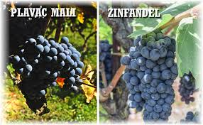 Original Zin: The Real Story of This Unique Grape
