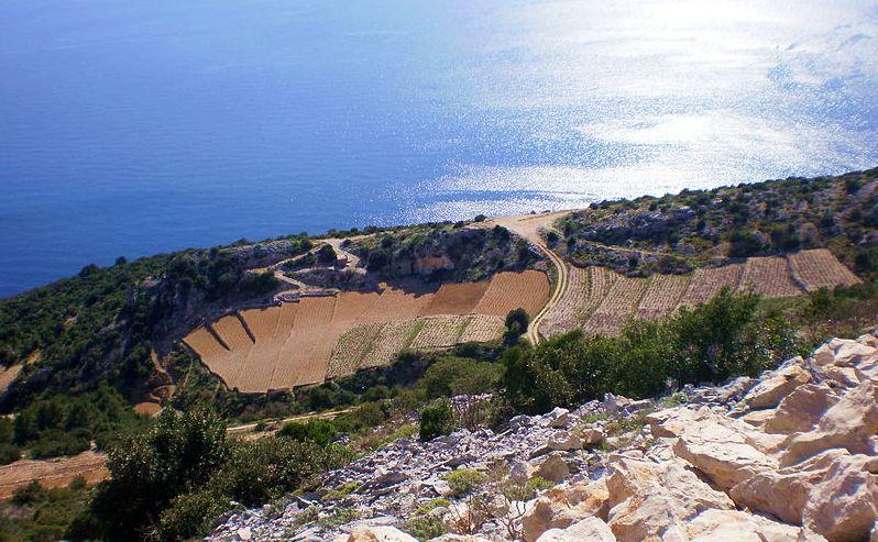 dingac vineyards