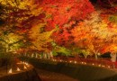 ใบไม้เปลี่ยนสีปี 2018 วันที่เท่าไหร่? สถิติงานเทศกาลชมใบไม้เปลียนสีที่ Fuji Kawaguchiko 5 ปี ย้อนหลัง