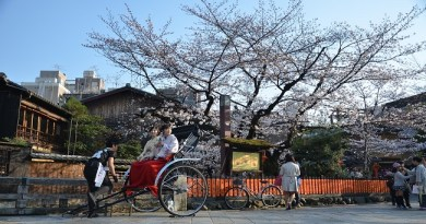 ซากุระ ปี 2019 วันที่เท่าไหร่? สถิติงานเทศกาลชมซากุระบานที่ Fuji Kawaguchiko 4 ปี ย้อนหลัง