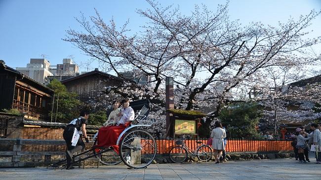 Fuji kawaguchiko Sakura Cherry Blossom ซากุระ