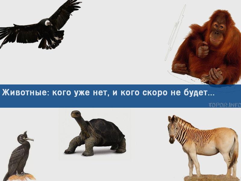 Какие животные вымерли и какие вымирают