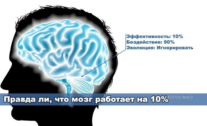 Правда ли, что мозг работает на 10 процентов