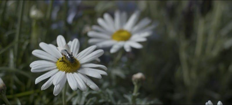 Пчела-дрон
