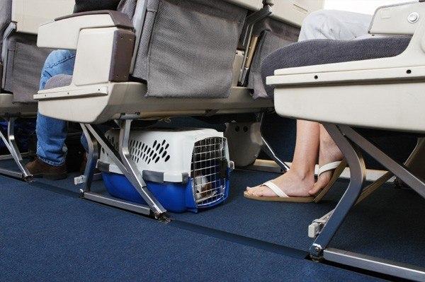 Viajar con perros en tren