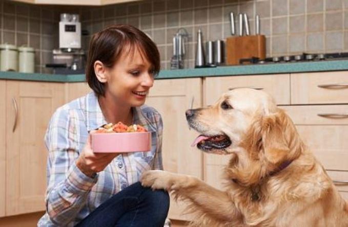 ingredientes alimentación canina