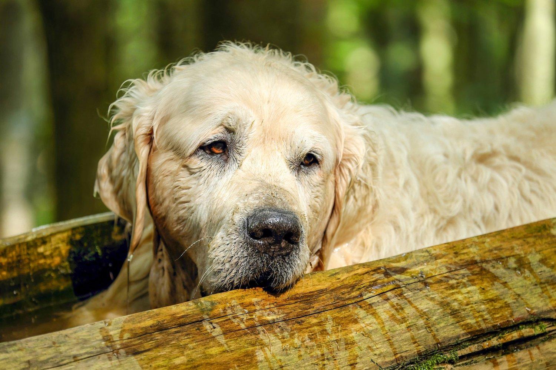 Apoyo alimentario en perros con insuficiencia renal