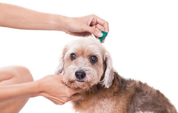 Pipetas antiparasitarias -Antiparasitarios para perros