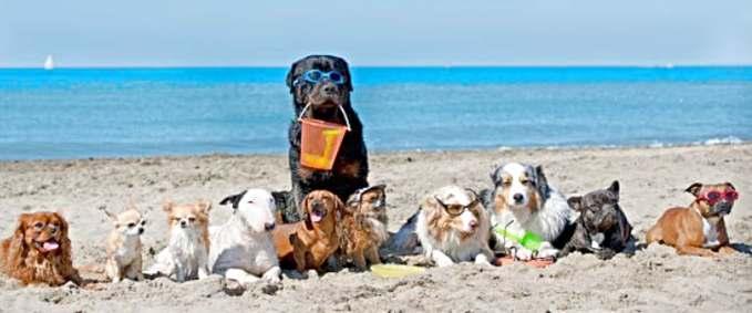 Playas que admite perros en España - varios perros en la arena