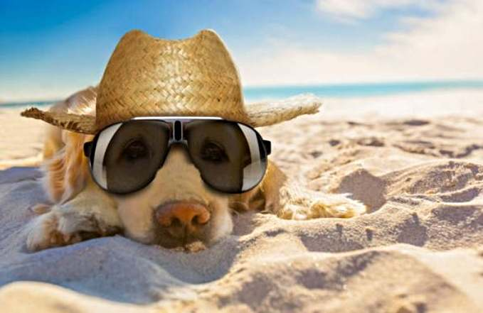 playas que admiten perros en España