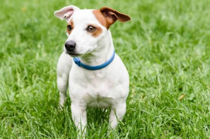 collar antiparasitario -Antiparasitarios para perros