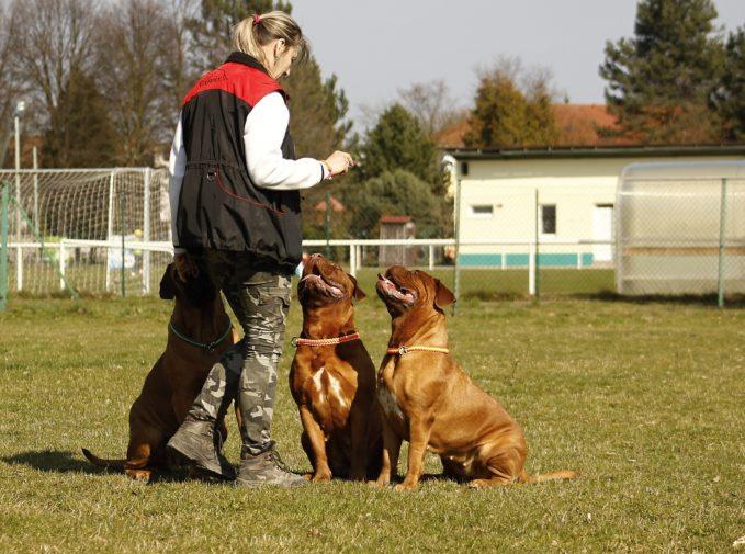curso de adiestramiento canino para particulares