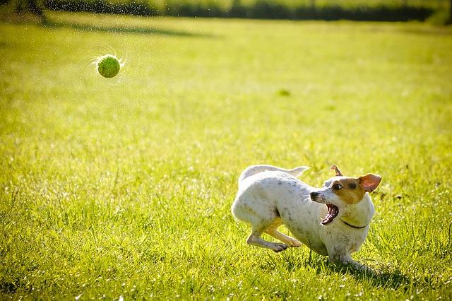 Mejores piensos sin extrusionar para tu perro