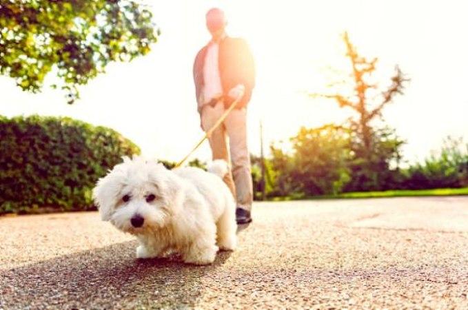 Pasear al perro beneficios