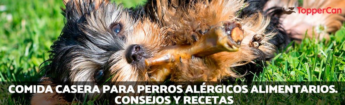 Comida casera para perros alérgicos.