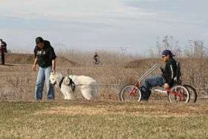 Mushing cart